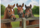 Amicable Horses Puzzle - 500 pc