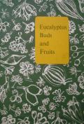 Eucalyptus Buds and Fruits