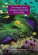 The Marine Life of Ningaloo Marine Park & Coral Bay