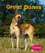 Great Danes