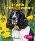 English Springer Spaniels
