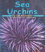 Sea Urchins (Ocean life)