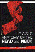Basic Anatomy of the Head and Neck