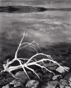 White Branches, Mono Lake, California, 1947