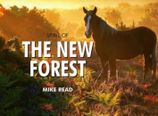 Spirit of the New Forest