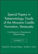 Fossils of the Castillo Formation, Venezuela
