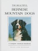 The Beautiful Bernese Mountain Dog