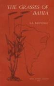 The Grasses of Bahia