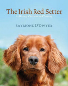 The Irish Red Setter