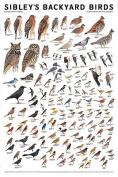 Sibley Backyard Birds