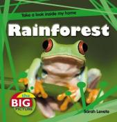Rainforest (The Big Picture)