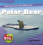 Polar Bear (The Big Picture)