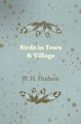 Birds in Town & Village