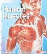 Human Muscles (Anatomy Class)