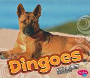 Dingoes (Pebble Plus
