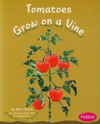 Tomatoes Grow on a Vine