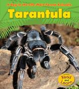 Tarantula (Day in the Life