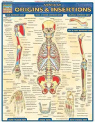 Muscular Origins & Insertions Laminate Reference Chart