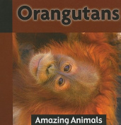 Orangutans (Amazing Animals)