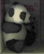 A Home for Panda (Amazing Animal Adventures