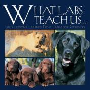 What Labs Teach Us...