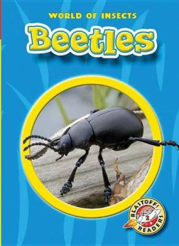 Beetles by Colleen A. Sexton
