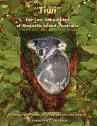 Tiwi the Lost Baby Koala