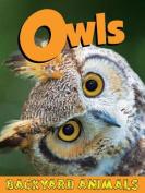 Owls (Backyard Animals)