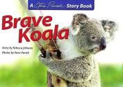 Brave Baby Koala