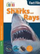 Australian Sharks and Rays