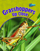 Grasshoppers Up Close (Raintree Perspectives
