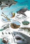Underwater Animals
