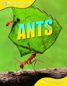 Ants (Animal Lives)
