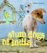 Slum Dogs of India