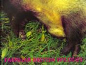 Familiar British Wildlife
