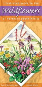 Illustrated Guide to the Wildflowers of Northern South Africa