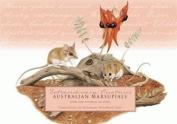 Australian Marsupial 20CardSet