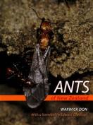 Ants of New Zealand