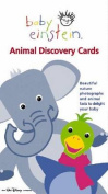 Animal Discovery Cards