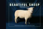 Beautiful Sheep Postcard Book