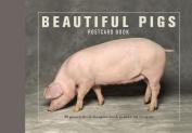 Beautiful Pigs Postcard Books