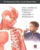 Complete Portfolio of Human Anatomy and Pathology