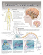 Neurons & Neurotransmitters Wall Chart