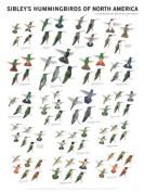 Steven M. Lewers & Associates LEWERSHN156 Sibleys Hummingbirds of N. America