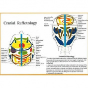 Cranial Reflexology