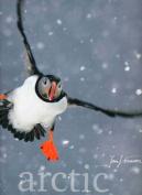 Arctic: Jan Vermeer