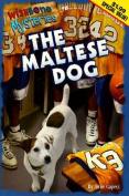 Wishbone Sweepstakes the Maltese Dog