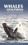 Whales and Dolphins of Newfoundland and Labrador