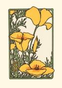 California Poppy, (Boxed)