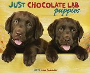 Just Chocolate Lab Puppies Wall Calendar